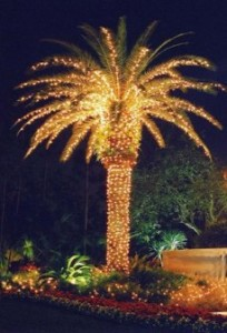 NAPLES (Christmas Lights on Palm #3)