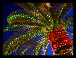 NAPLES (Christmas Lights on Palm)